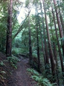 Redwood-Forest2