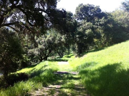 Oursan-oaks