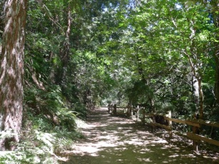 Redwood-Bridle