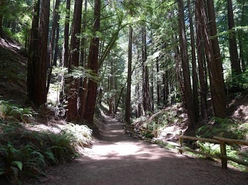 Redwood-Stream